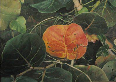 red Leaf-1